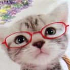 猫まんま ( hisami5312 )