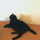 〇〇黒猫。 ( kuronekoooo )