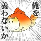 れな✪綺麗な水を探してる魚( 'o' ∋ ( guri_goldfish )