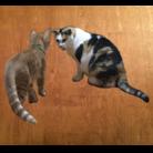 猫ねこネコ!チャム&シロ ( peach-tamaki )