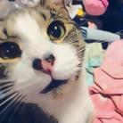 CAPTAIN_CAT ( hiiiiiii_la )