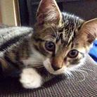 Cats💝 ( 4cats )