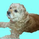 愛犬のモコさん ( mikimoco )