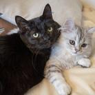 猫に救われたから猫を救うショップ ( kumagoma0731 )