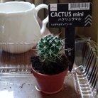 サボテン ( Orucinus0614 )