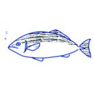 イカタコ漁業 ( ikatakogyogyou )