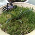 veranda_lavender