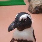 怪鳥🐧【人を必ず笑顔に!幸せのペンギン】 ( Teri-Baka-RADIO )