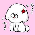 かささぎ壱生 ( itsuki039 )