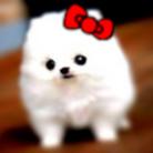 狂犬もちお@もちょ ( kurosama69 )