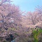 舞希花🌸まのか ( Mano_full_bloom )