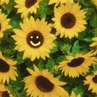 』Always Keep Sunshine in your heart🌻 ( yume-boshi )