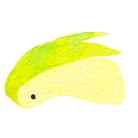 ゆも茶 ( ryoku_ti )