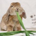 *sweet LOVE rabbit* ( since1986rabbit )