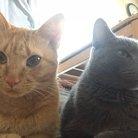 ほのぼの猫ちゃんねる 【ロシブー】&【茶トラ】 ( 8rms6kSDJxhYXKL )