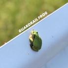 ガードレエル ( Guardrail_Frog )