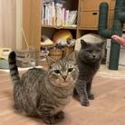 猫のさばみそ&ごましお百貨店(さばごま百貨店) ( SabaGoma_cat )