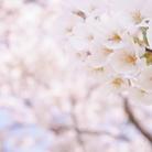 咲きショップ ( saki-27 )