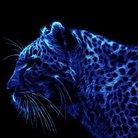 青柳麗央 ( blueleopard1017 )