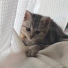 猫汰 ( amo_san531 )