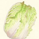 白菜 ( hakusai012 )