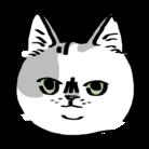 ネコに真珠 ( ito_shinju00 )