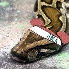 ゆたろ@カエルさん家のニシキヘビ ( Yutarosandayo )