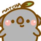 抹茶こあら ( Matcha_koala )