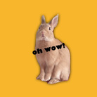 RAVI the rabbit ( RAVIchan )