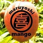 まるよしマンゴー農園 沖縄 ( maruyoshi_mango )