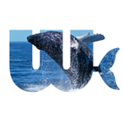 WBStore ( WhaleBeats )