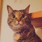 Lovely CAT ( LOVELY-CAT-22 )
