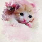 chaton mimi lapereau ( kokuto )