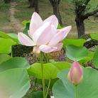 ☾最❅果✬て❆の河❃原✯ ( saihatenouma )