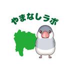 やまなしラボ ( yamanashilab )