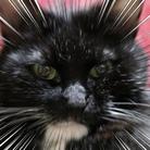 黒猫の日常 ( kuma_0915 )