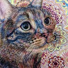 猫の店 ( N_saiun )