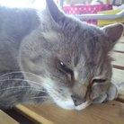 信濃の猫 ( naganeco )