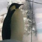 あやこう ( penguin_425 )