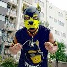 はち・犬マスク ( pup_Hachi )