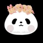 Tanaka Zabieru パンダショップ ( TanakaZabieru )