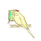 小鳥のほっぺ ( hoppe-birds )