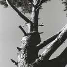 treeseek