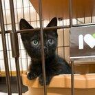 かわいい黒猫ハーブ🌿 ( herbs_the_cat )