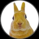 うさぎのふゆちゃんSHOP ( fuyu_bunny )
