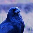 黒羽写真館 ( crow-nin57 )