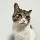 しめじ猫17 ( simezicat )