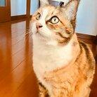 みほこ (猫好き・脱原発) ( miho_hana33 )