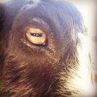 百の炭酸 ( pop_goat )