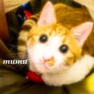 茶白猫むむグッズ ( mumumukochan )